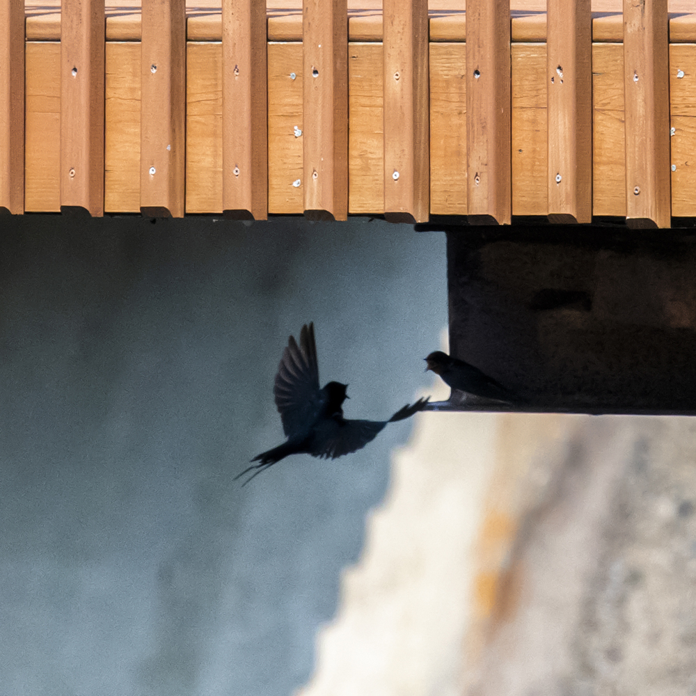 Swallows nesting under lakeside townhome balcony