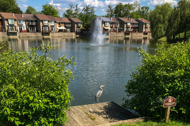 Summer Lake, Blue Heron
